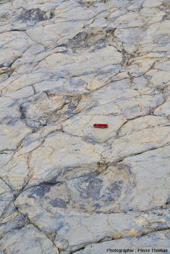 Piste de sauropode (site 3), La Rioja (Espagne)