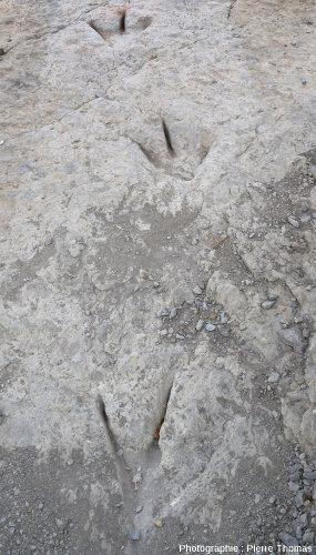 Zoom sur la piste de théropode avec des empreintes particulièrement bien marquées de doigts particulièrement fins, La Rioja (Espagne)