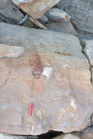 Une couche de grès d'une cinquantaine de centimètres d'épaisseur surmontée d'une couche de marne d'une dizaine de centimètres, Sopelana (au Nord de Bilbao)