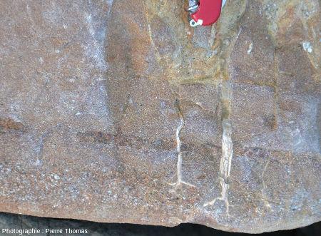 Zoom sur la base de cette couche de grès, Sopelana (au Nord de Bilbao)