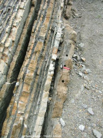 Belles figures de slumping dans une couche de grès calcaires à Zumaia (Espagne)