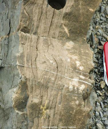 Zoom sur ces belles figures de slumping dans une couche de grès calcaires à Zumaia (Espagne)