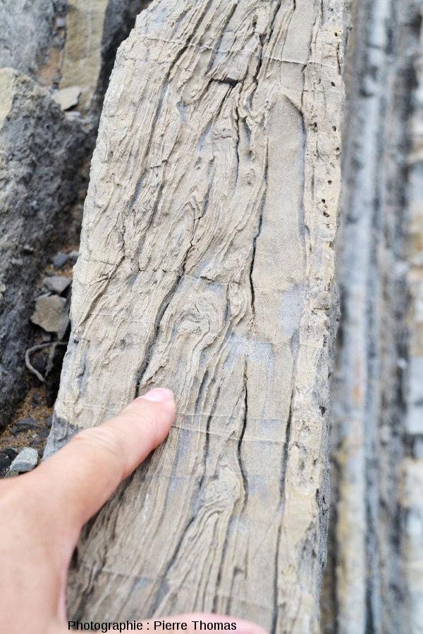 Détail de ces figures de slumping dans une couche de grès calcaire à Zumaia (Espagne)