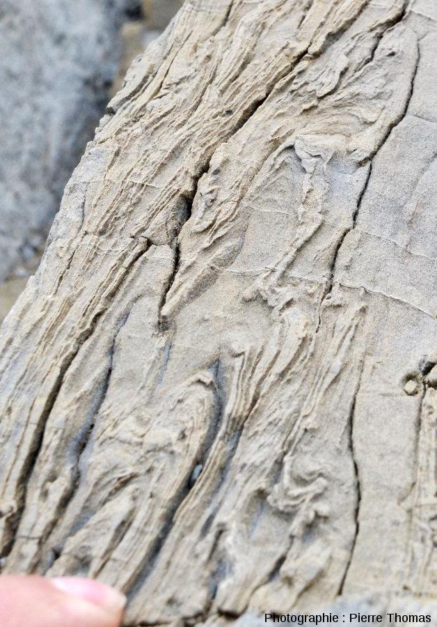 Zoom sur ces figures de slumping dans une couche de grès calcaire à Zumaia (Espagne)