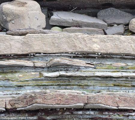 Zoom sur des couches de grès dont l'une montre de beaux de slumps et/ou convolutes de cet affleurement dans la baie de Loya (Pyrénées Atlantiques)