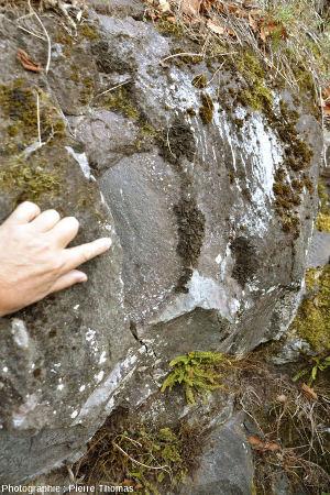 Bordure d'un gros coussin de lave montrant de nombreuses vacuoles pleine de calcite, près de Soraluze (Pays Basque espagnol)