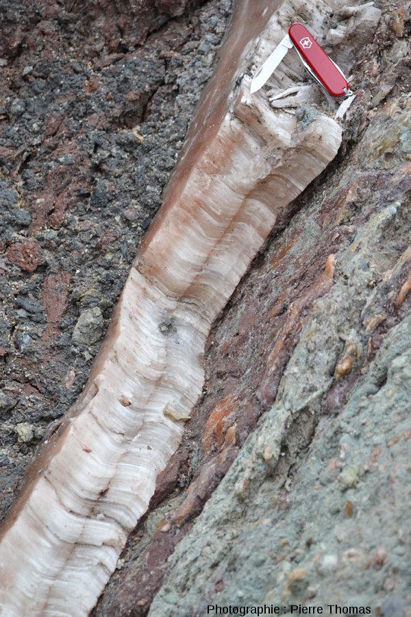 Filon de gypse fibreux recoupant des brèches argilo-gypseuses, Bidart, Pyrénées Atlantiques