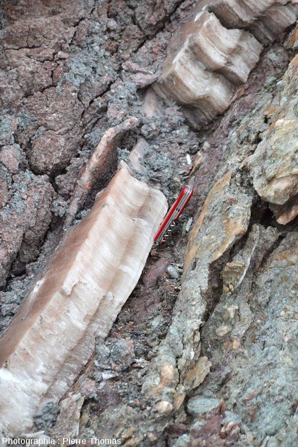 Vue sur un filon de gypse fibreux recoupant des brèches argilo-gypseuses, Bidart, Pyrénées Atlantiques