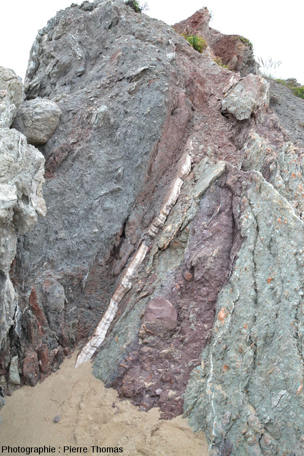 Filon de gypse fibreux dans la falaise de brèches argilo-gypseuses délimitant la plage de Bidart, Pyrénées Atlantiques