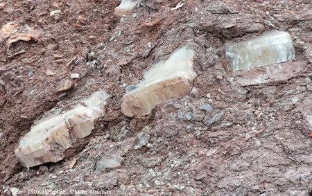Filon de gypse disloqué dans un compartiment très riche en argile du Trias gypsifère de Bidart, Pyrénées Atlantiques