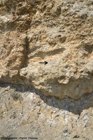 Base du niveau de gypse triasique du diapir de Lazer (Hautes Alpes) reposant sur les marnes noires