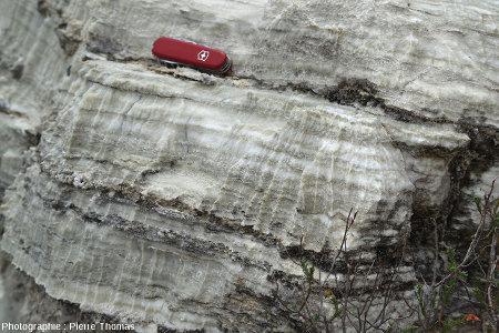 Vue plus large sur ces rigoles de dissolution dans des couches de gypse oligocène basal, Mormoiron, Vaucluse