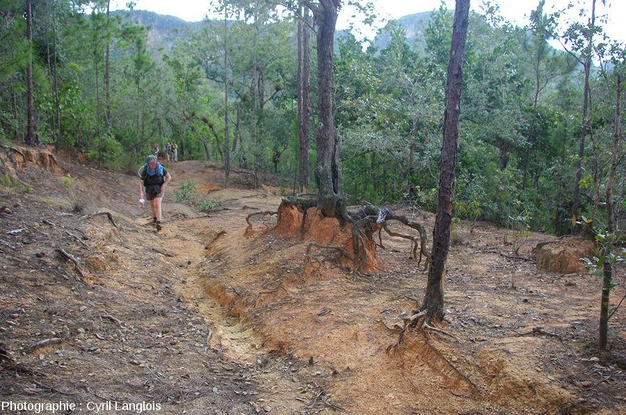 Un secteur d'une forêt de Cuba montrant une reprise d'érosion
