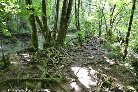 Action protectrice des racines des arbres face à l'érosion, Jura