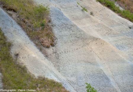 Une piste animale (renard?) traversant une pente argileuse très raide dans le ravin de Corbœuf
