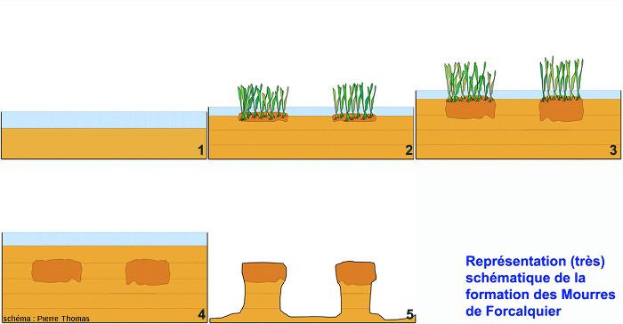 Figure en 5 schémas illustrant comment a pu se former l'étonnante morphologie des Mourres