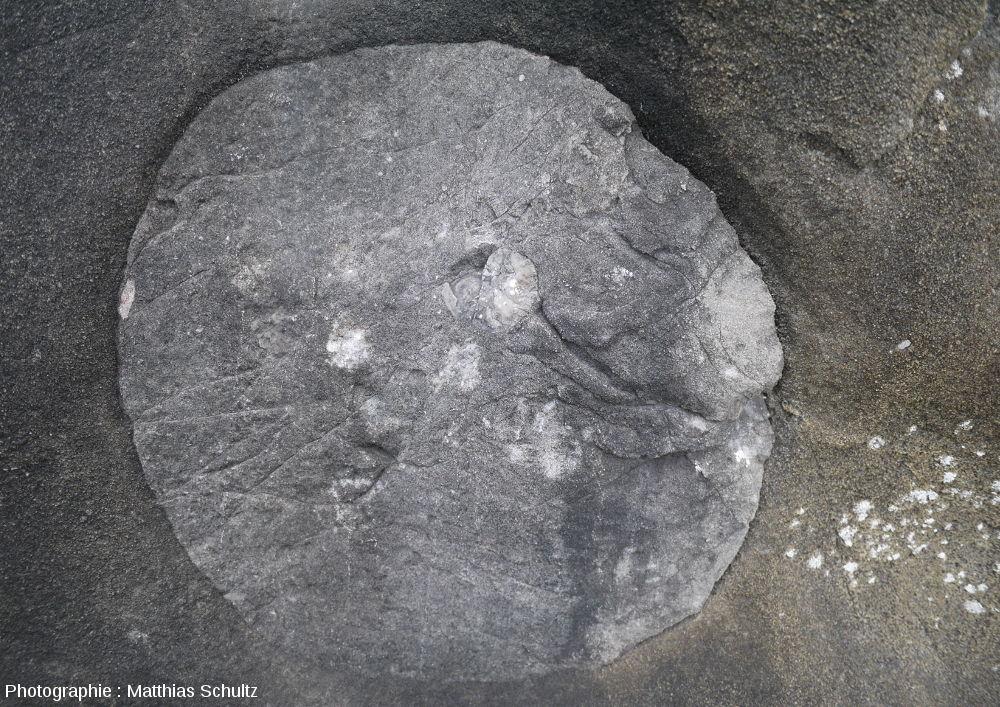 Détail d'une paléomarmite de géant de Pointe-au-Pic, Québec