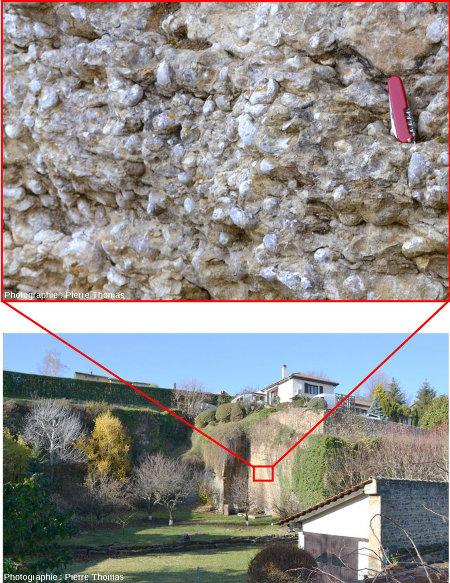 Calcaire à gryphées du Sinémurien et ancienne carrière de Saint-Fortunat, commune de Saint-Didier-au-Mont-d'Or (Rhône)
