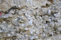 Les calcaires à gryphées, ammonites et autres fossiles du Sinémurien (Jurassique inférieur)