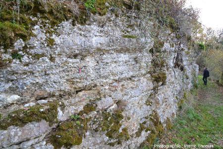 Vue générale de l'ancienne tranchée taillée dans le calcaire sinémurien à gryphées, Monts-d'Or lyonnais