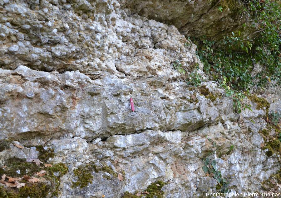 """Joints de stratification ondulés sur une falaise """"naturelle"""" de calcaire à gryphées (Sinémurien des Mont-d'Or lyonnais)"""