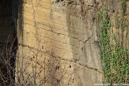 Front de taille très plan (car résultat de sciages) montant les ondulations des joints de stratification