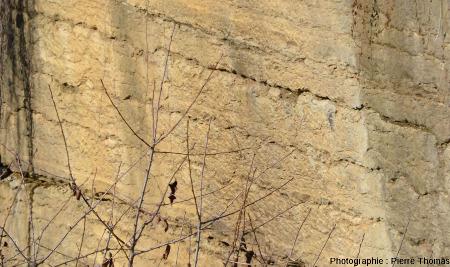 Détail d'un front de taille très plan (car résultat de sciages) montant les ondulations des joints de stratification