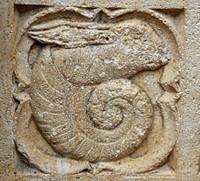 Du Jurassique au Quaternaire, les ammonites réelles et imaginaires de l'agglomération lyonnaise