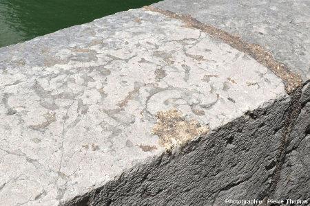 Ammonite au sommet d'un parapet du quai Tilsitt (Lyon 2ème), sommet constitué avec des dalles horizontales de calcaire bathonien (choin de Villebois)