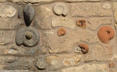Fossiles implantés dans la façade de la Maison des carriers à Saint-Fortunat