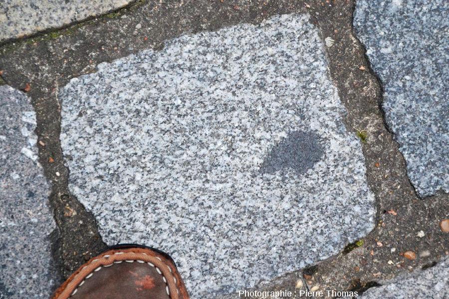 Un pavé de l'allée d'Italie (Lyon 7ème), pavé en granite