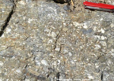 Exemple de conglomérat (et plus précisément de poudingue) du Carbonifère moyen briançonnais (Westphalien = Pennsylvanien moyen = 310 Ma)