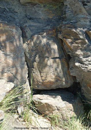 Zoom sur un arbre fossile en position de vie
