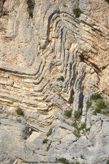 Zoom sur les plis de seconds ordre affectant le cœur de cet anticlinal disharmonique des Hautes Alpes