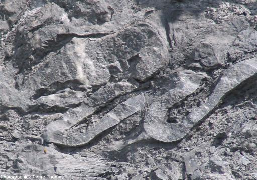 """Zoom sur ces microplis """"occidentaux"""" au sein de marnes noires du Bajocien, au Sud-Est d'Embrun (Hautes Alpes)"""