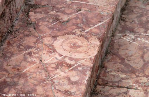 """Une ammonite dans les gradins en """"marbre de Guilletsre"""" de la place Joseph Salva (Guillestre, Hautes Alpes)"""