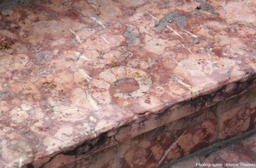 """Un autre gradin à ammonite en """"marbre griotte"""" de la place Joseph Salva de Guillestre, Hautes Alpes"""