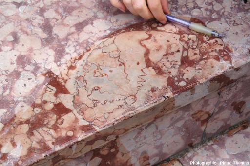 """Section d'ammonite sur un gradin en """"marbre griotte"""" de la place Joseph Salva de Guillestre, Hautes Alpes"""