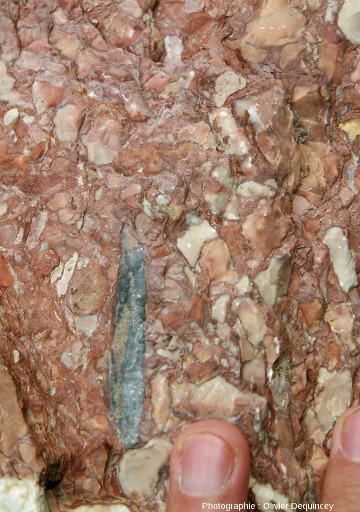 Zoom sur une bélemnite dans le calcaire griotte de Saint Crépin