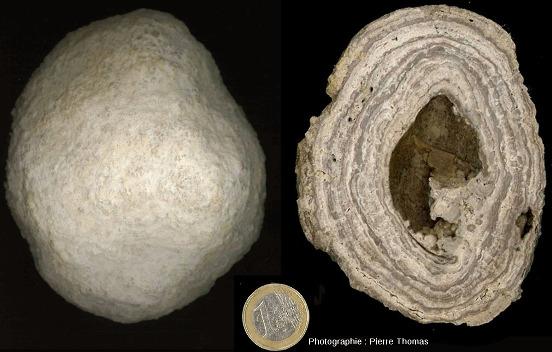Face externe (à gauche) et section (à droite) d'une concrétion stromatolithique ayant crû autour d'une coquille de gastéropode, coquille presque totalement dissoute, lieu-dit des Monts-Martin, Marne