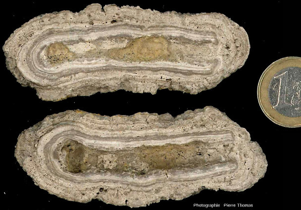 Exemple d'une concrétion stromatolithique de forme cylindrique et non sphérique