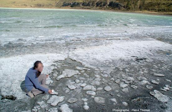 Un lac à stromatolithes décimétriques, la Laguna Amarga en Patagonie
