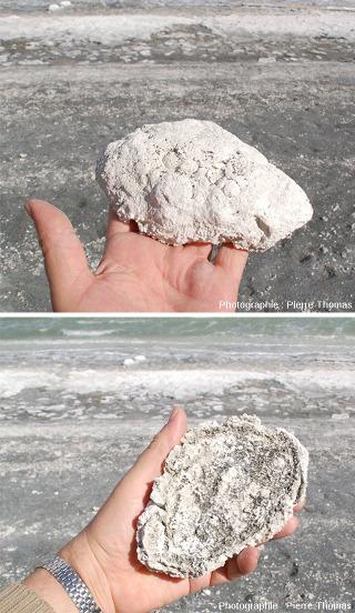 """Forme """"en soucoupe"""" des stromatolithes de la Laguna Amarga en Patagonie"""