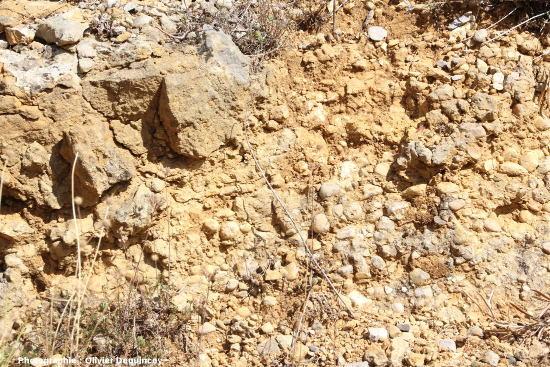 Affleurement de conglomérat miocène à galets, dont certains sont perforés, Arboras (Aude)