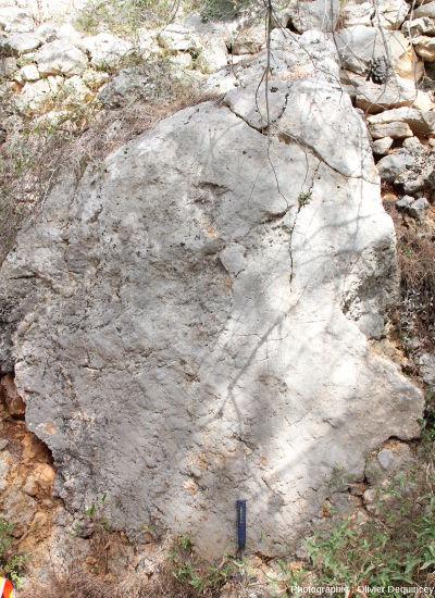Miroir de faille sur substrat calcaire à Arboras (Aude)