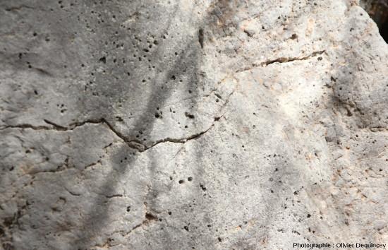 Surface perforée du miroir de faille d'Arboras (Aude)