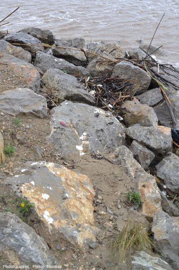 Blocs calcaires de la digue de Gruissan (Aude)