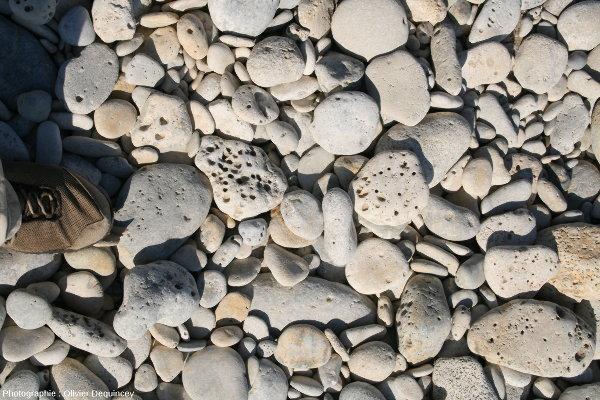 Galets calcaires perforés sur une plage de l'ile de Ré (Charente Maritime)