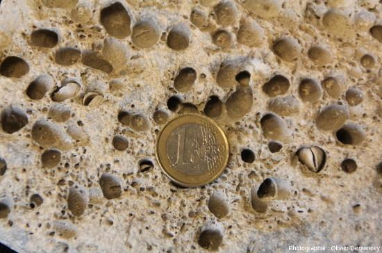 Zoom sur ce galet perforé ramassé sur une plage de l'ile de Ré (Charente Maritime)