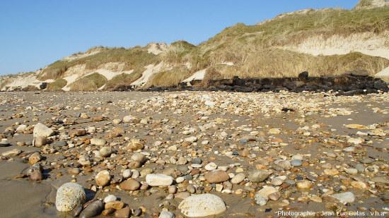 Niveau de tourbe argileuse à la limite plage/dune sur les communes de Grayan-et-l'Hôpital, Vensac, et Vendays-Montalivet en Gironde